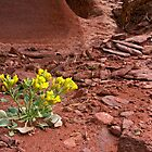 Tough Desert Flower by Bryan Peterson