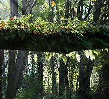 Tree Branch with Ferns and Moss and Slanted Sunlight by Stacey Lynn Payne