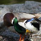 Duck Yoga by Ajeet