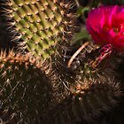 Flowering Cactus by Leslie  Hagen