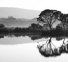 River Reflections by Paul Moore