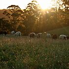 Sheep at Dusk by Tania Russell