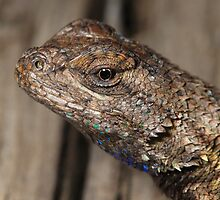 Close-up of Lizard head by bubblenjb