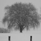 Weeping Willow in Snow  by Cody  VanDyke