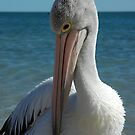 A Shy Pelican by Kylie Roberts
