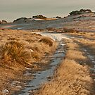 Snow tracks in the early morning - Poolburn, New Zealand by Fineli
