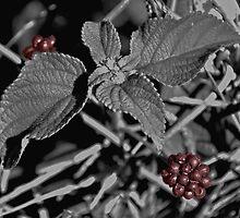 Redberries by Jen Waltmon