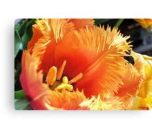 Tulip With A Fringe On Top Canvas Print