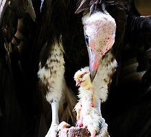 Vulture rips apart its prey by MidnightRocker