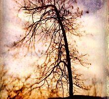 Vieja Tree by Kelly J  Parsons
