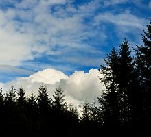 the forest skyscape by Gary Heald LRPS