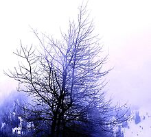 Fog Among Branches by Tori Snow