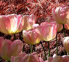Petal Pink by Patty (Boyte) Van Hoff
