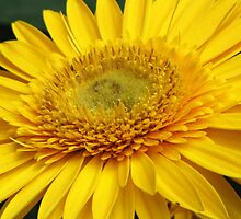 A Slice of Sunshine by lorilee