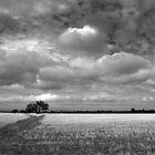 Scary Tree - Wilmington Wheat Field by Ben Loveday