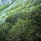 Hills at Shoreline Park 1061 by eruthart