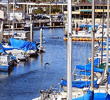 Redondo Beach Harbor 1146 by eruthart