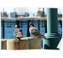 Pigeons 1148 Poster