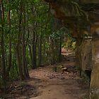 Bushwalk by Smarsh