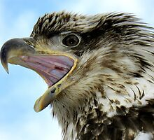 Say Aah ~ Young Eagle by lanebrain photography