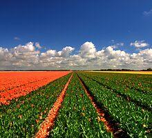 Tulipfields by Hetty Mellink