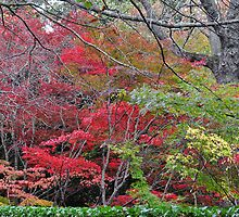 Mt Wilson NSW - Autumn Glory by Bev Woodman