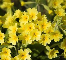Woodland Primroses by BizziLizzy