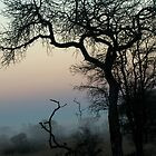 African Winter Tree at dusk by Neil  Bradfield