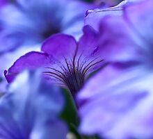 Petunia by friendlydragon