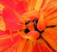 Tulip Heart by Jo Nijenhuis