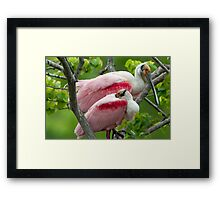 Two Male Roseate Spoonbills Framed Print