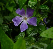 April shower, April flower by Themis