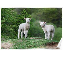 Lambs Poster