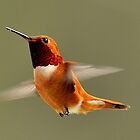 Rufus Humming Bird by j Kirk Photography                      Kirk Friederich