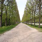 Roads of Trees ,Palace Versailles by blindskunk