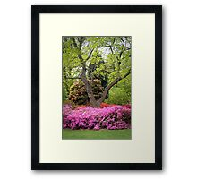 "The Boss said, ""Let There BE C O L O U R"": and there was colour... WOW! Framed Print"