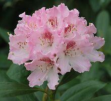 Pretty Pink Bee Pleaser, Shipley, Derbyshire by geniewhizz