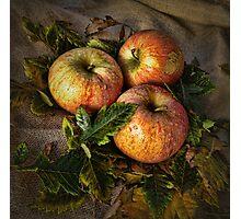 Three Apples Photographic Print