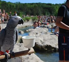 Water. A Parrot. No Pirates by Roschetzky