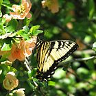 Butterflies and Quince by JeffeeArt4u