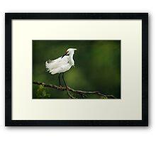 Snowy Egret II Framed Print