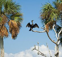 Cormorant Drying by Stacey Lynn Payne