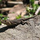Anole in His Brown Shade by JeffeeArt4u