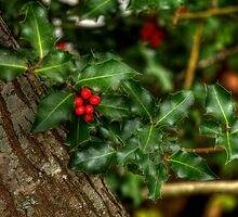 A Touch Of Holly by Ian Creek
