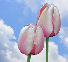 Pink Tulips Blue Sky by SmilinEyes