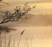 Misty Morning by Donna-R