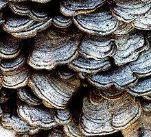 Fungus Fresco  by clizzio