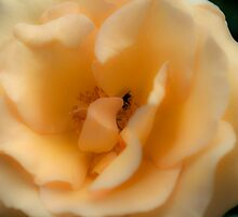 Softer than Soft by Brandie1