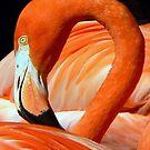 Flaming Flamingo by paintingsheep