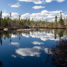 Coastal Bog by Sue  Cullumber